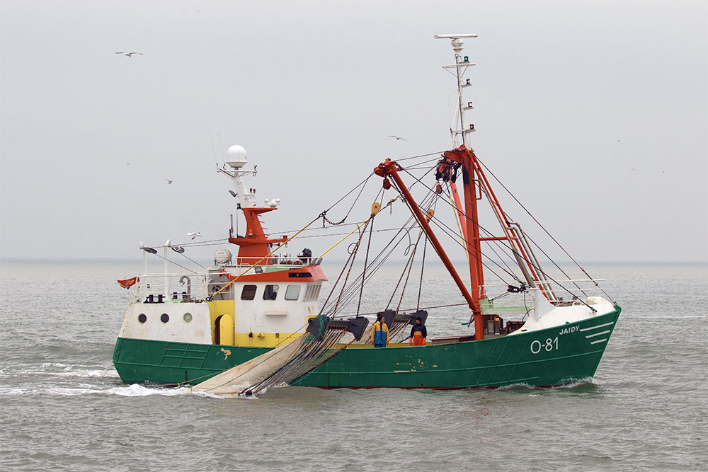 For sale Beamtrawler O-81 Jaidy